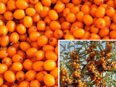 Natural Purgative Remedies Buckthorn For Constipation