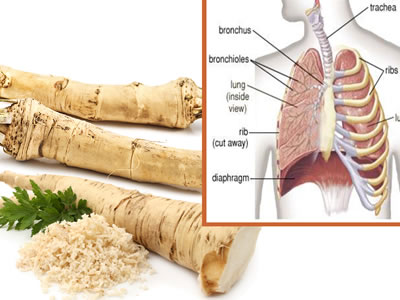 horseradish for-bronchitis